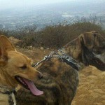 "Barking Attendant, Steph's dogs ""Knox"" and ""Mr. Peabody"" enjoying their excercise, a hike up Cowles Mt."